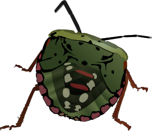 The Stink Bug, cartoonized. Courtesy of http://www.clker.com/.
