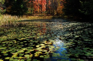 Lily Pond, by Valley Falls State Park ,WV (c) Tim Dicke