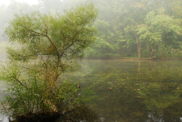 Fog at Loch Raven, Baltimore County. (c) Tim Dicke