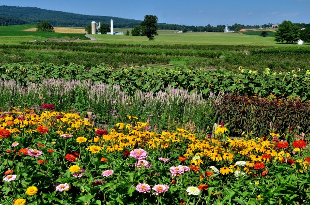 Flower Picking Orchard, Catoctins, Maryland. Photo (c) Tim Dicke