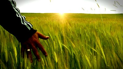 photo from: http://ak.picdn.net/shutterstock/videos/1217134/preview/stock-footage-walking-through-field-of-wheat.jpg